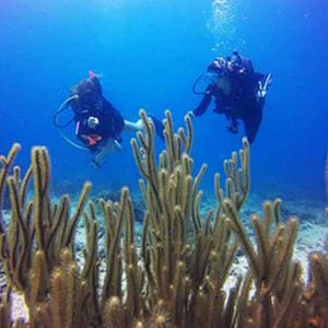 ecokohtao.com-marine-conservation-reef-check-ecodivers-koh tao-thailand